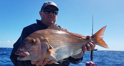 F系列鼓轮渔获,真鲷(新西兰钓场)