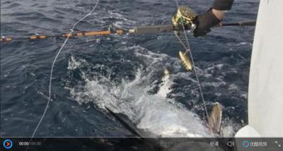 2018年美国北卡实战巨型蓝鳍金枪鱼 -Transformer铁板竿,鼓轮R90、70,改装线杯