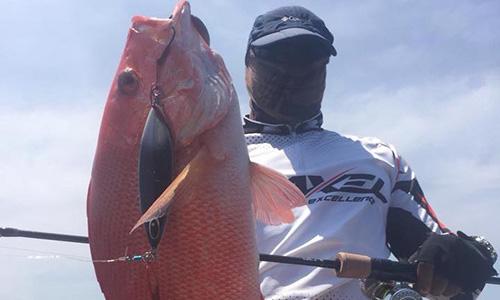 RP60慢摇钓竿+F系列鼓轮渔获(马来西亚钓场)