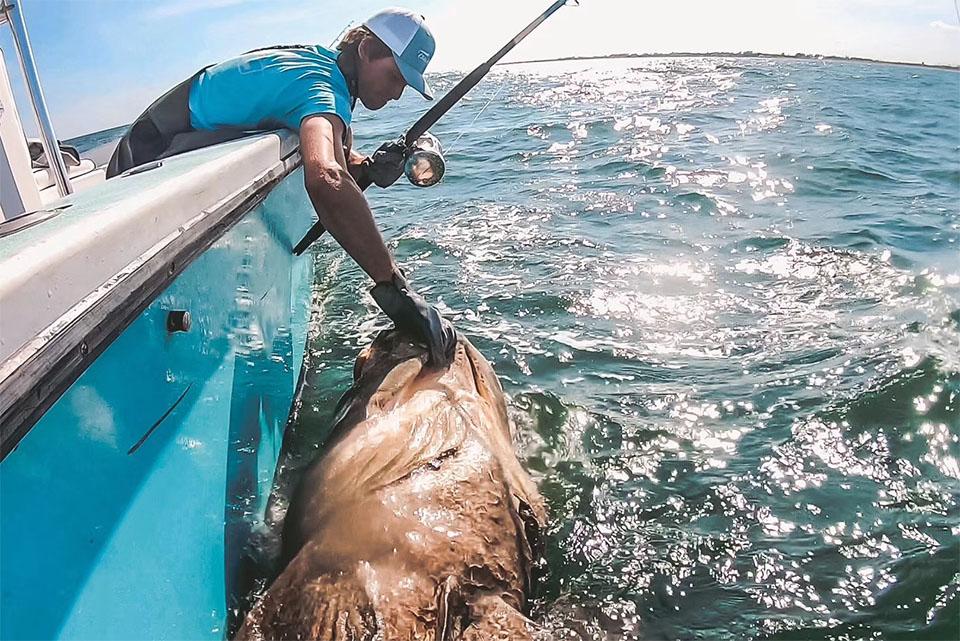 OC系列双速拖钓鼓轮渔获,巨人石斑(美国钓场)