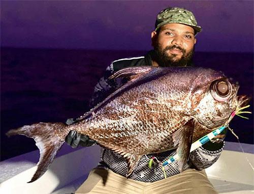 R系列慢摇铁板鼓轮渔获,鲳鱼(马尔代夫钓场)