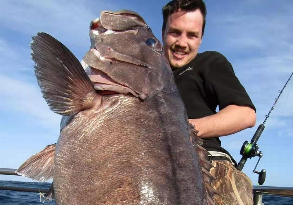 Maxel海钓鼓轮F系列渔获大石斑(新西兰钓场)
